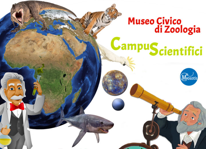 Campus-Scientifici-estivi-museo di zoologia